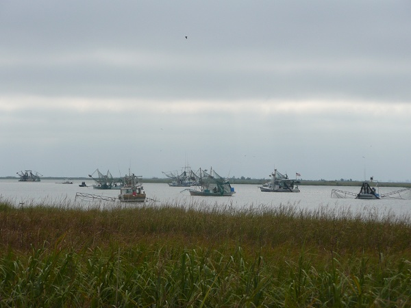 Shrimp boat fleet preparing to head out into the Gulf.